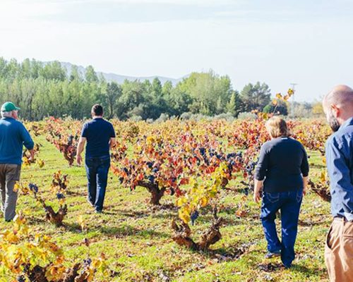 vendimia Vins del Comtat