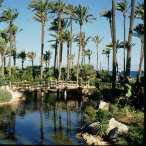 Palmeral Alicante