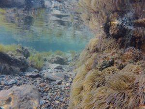underwater-landscape-963615__340