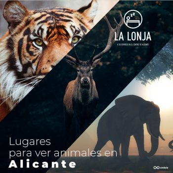 animales hostal la lonja alicante